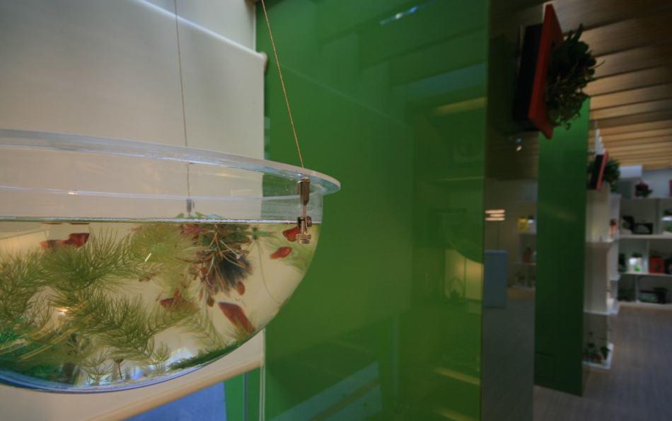 休闲多元生态缸设计图片