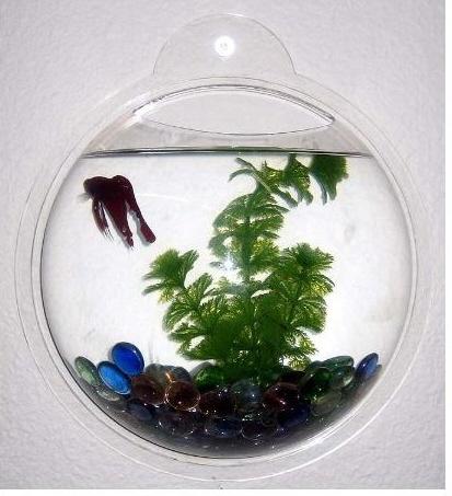 房间壁挂鱼缸|设计软