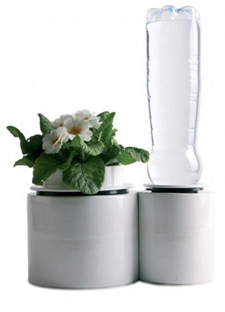现代厨房的盆栽植物